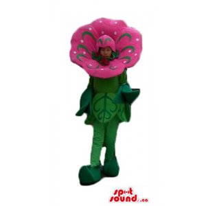 Deluxe pink and green Poppy...