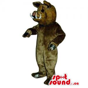 Customised All Brown Boar...