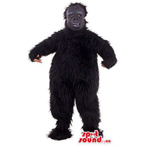 Black Woolly Monster...